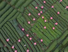 航拍:侗寨茶园秀旗袍