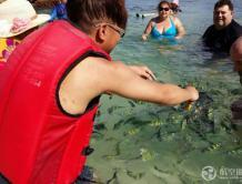 海里喂鱼违法!3名中国游客泰国攀牙喂鱼被抓