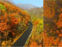 航拍京郊原始森林秋日层林尽染