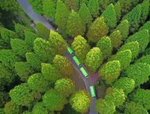 航拍江苏黄海海滨国家森林公园 满目苍翠美如画