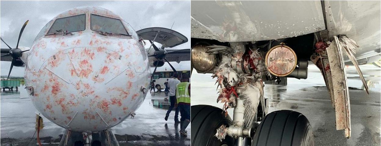 客机降落时遭遇一群大鸟撞击 机头血迹斑斑