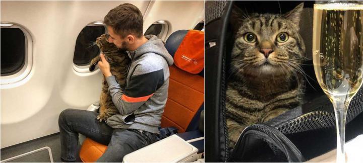 """用""""掉包""""手法将肥猫带上飞机  男子被俄航取消累积里程"""